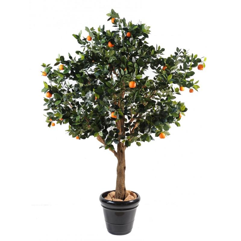 Oranger Pas Cher En Ligne